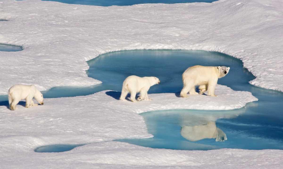 10 Hal yang Perlu Diketahui tentang Es Laut Arktik