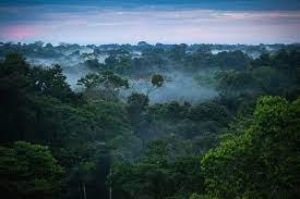The Ecotourism Revolution